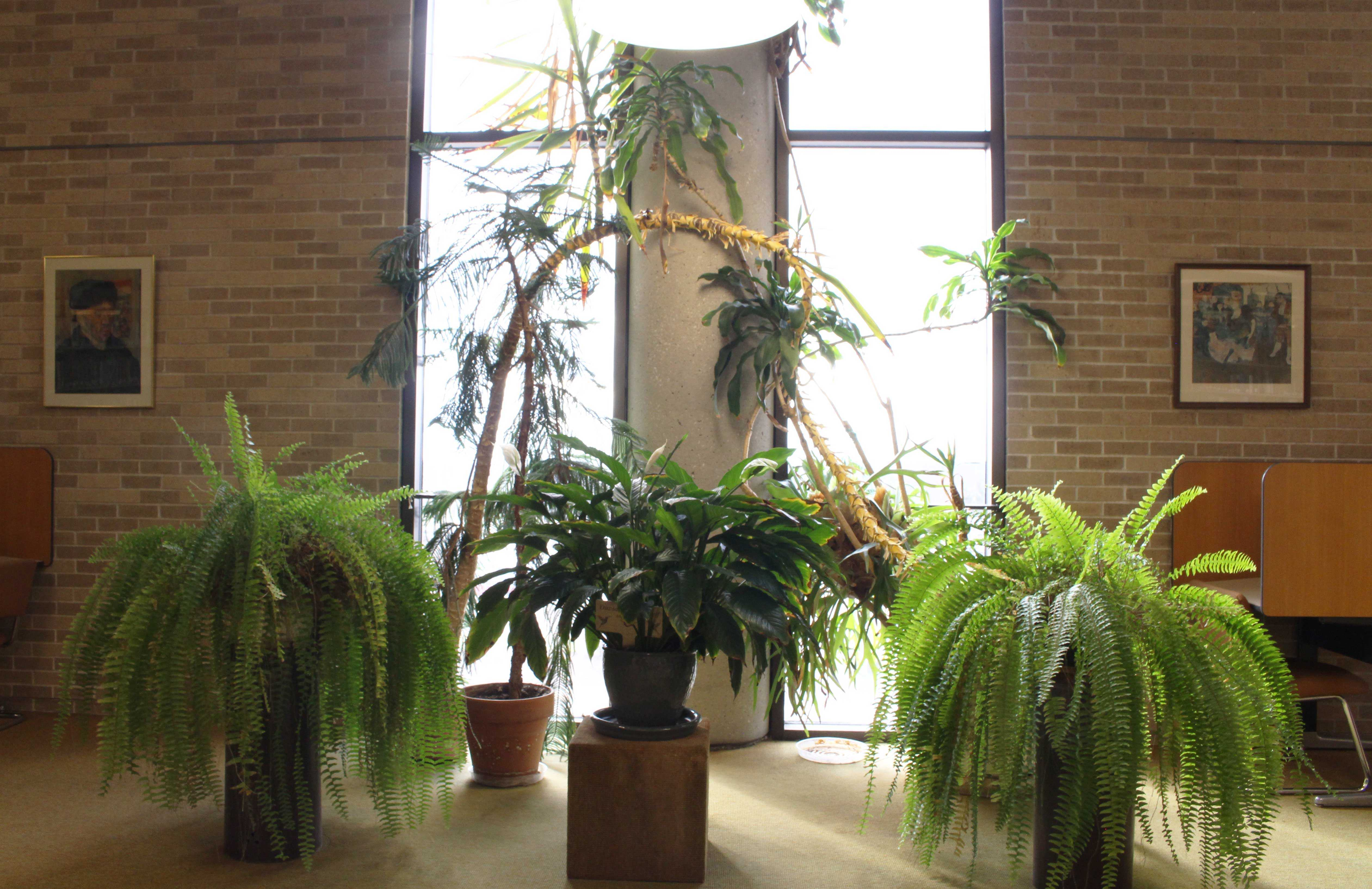 The Leslie F. Malpass Library is home to many plant species that have have their own preference on where in the library they stay.