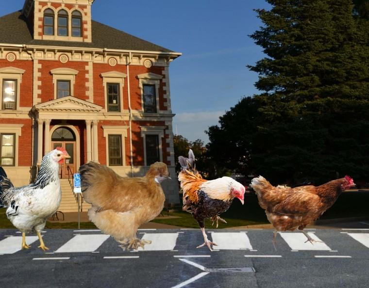 Let the chickens cross the road
