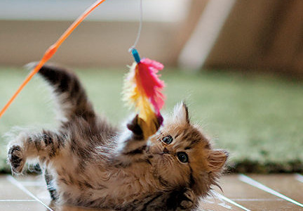 Playtime Pointers for Feline Fun