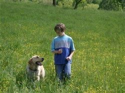 5 safety tips for indoor pets that venture outside