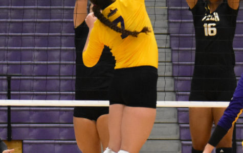 Volleyball goes to battle with Bison